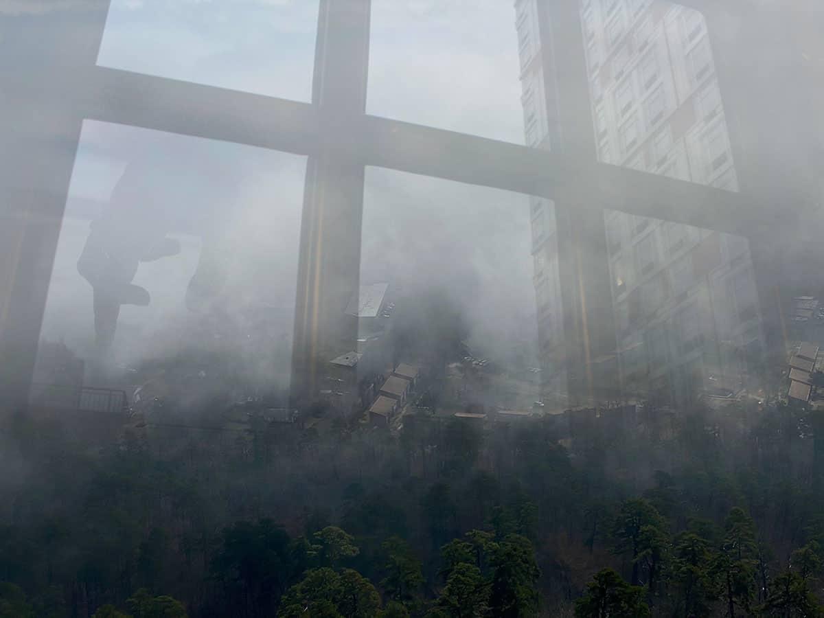 window overlaid with trees and smog.