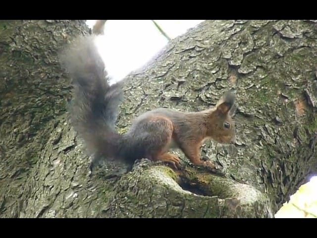 still from video of squirrel on tree
