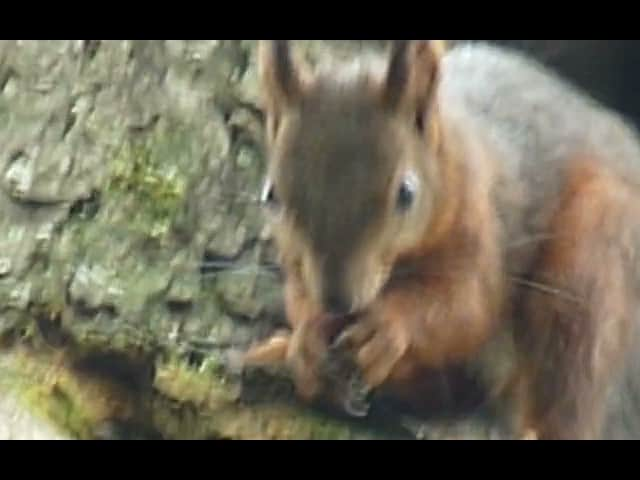 still of video of squirrel eating a nut