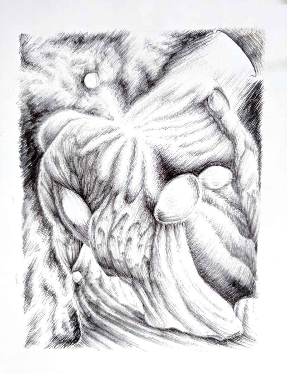 drawing of abstract natural forms