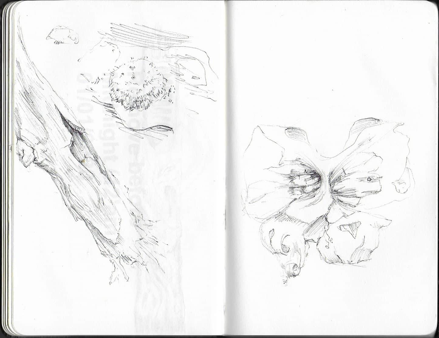 drawing of abstract natural forms, tree bark and seedpod like