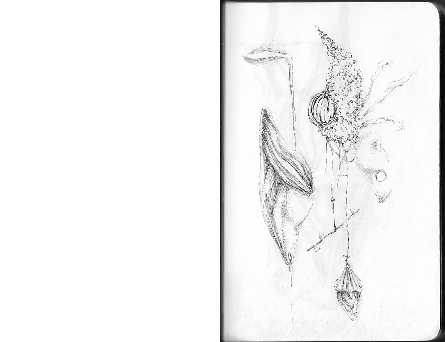drawing of natural forms that seem to be tied together and hang from each other