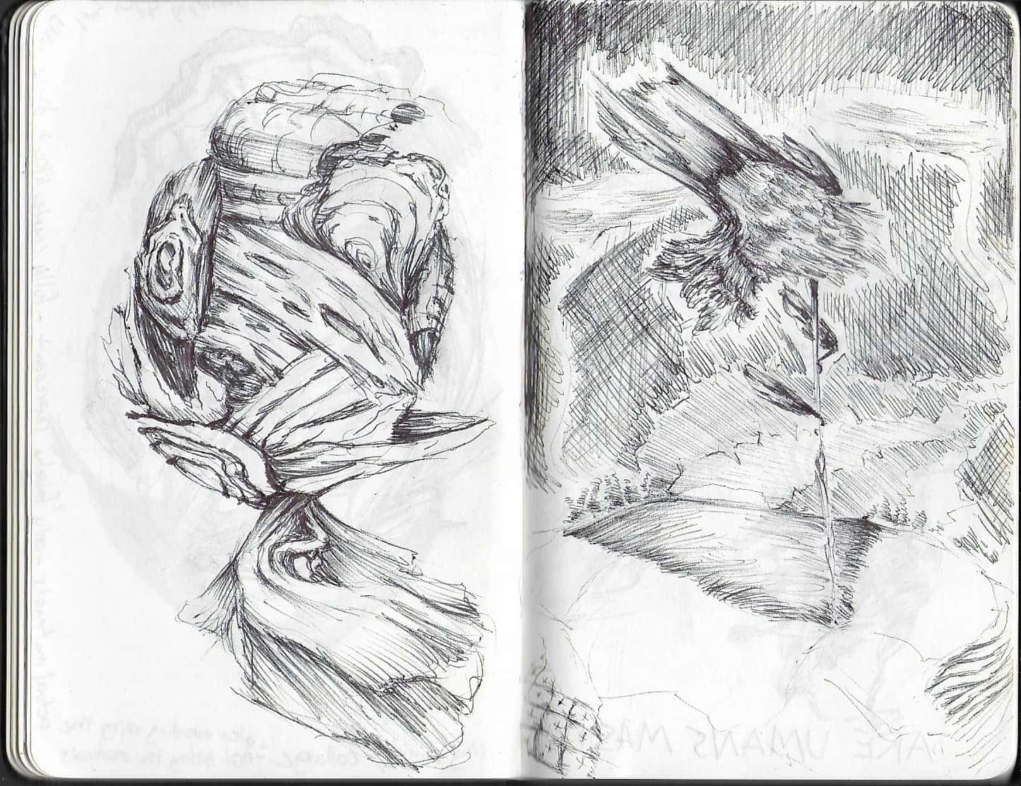 pen drawing of sketch abstract natural forms. On the right like a balancing ball of bark, on the right reminiscent of a flower in a field