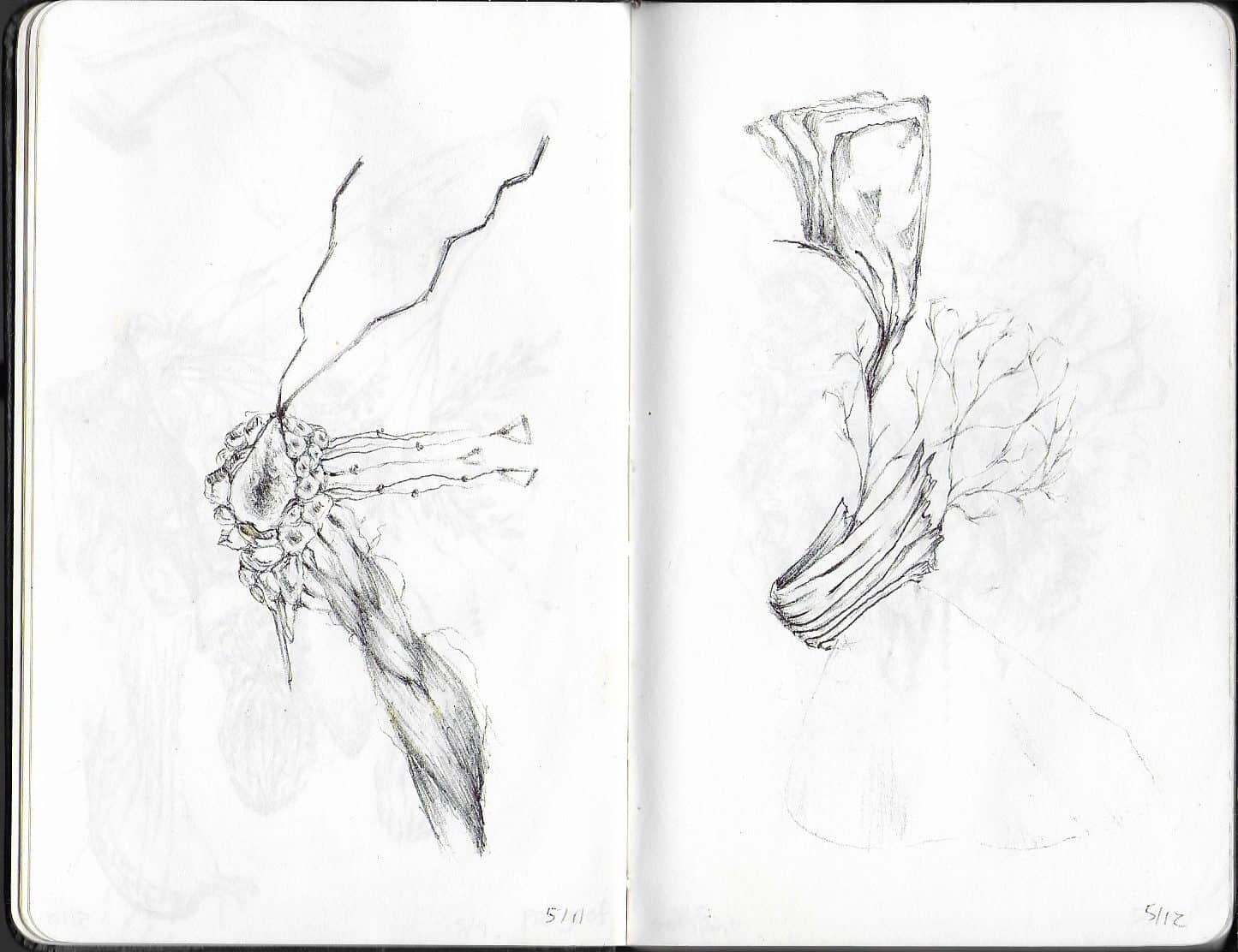 drawing of natural forms in pencil, reminiscent of plants and insects
