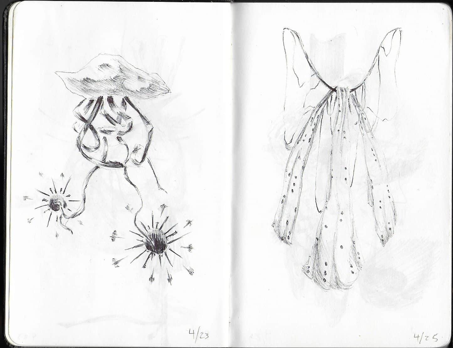 drawing of natural forms, on the left jellyfish-like with two spores undernieth, on the right reminiscent of fairy wings