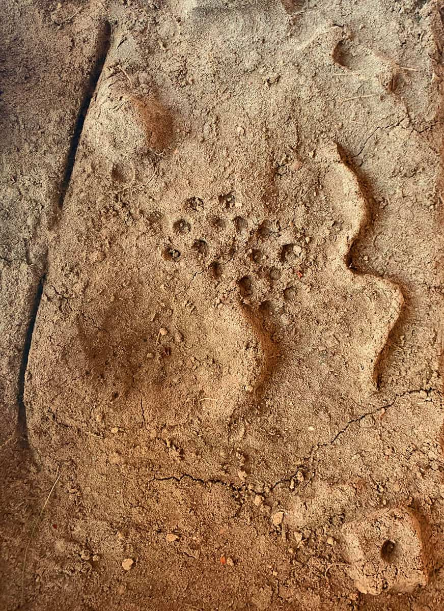 photo of shapes imprinted in dry reddish-tan earth